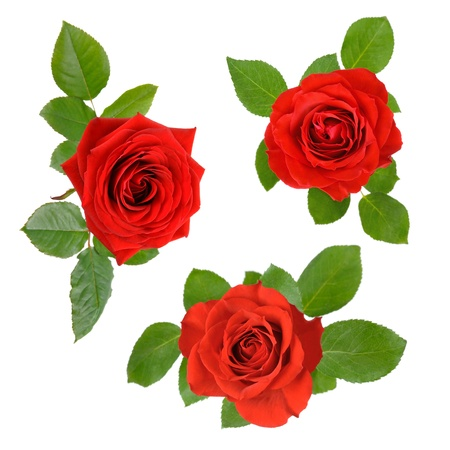 mother'sday: Three studio isolated beautiful red roses with leaves in a set