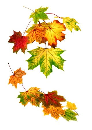 Multi-colored autumn leaves falling down, with white copy space photo