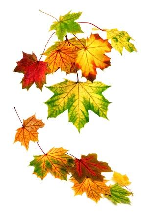 Multi-gekleurde herfst bladeren vallen, met witte kopie ruimte