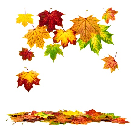 Multi-colored autumn leaves falling down, with white copy space Stock Photo - 14856461