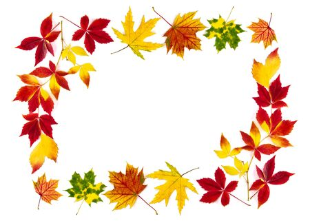 Multi-colored autumn leaves as a frame, with white copy space Stock Photo - 14856462