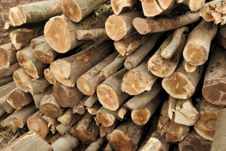 feedstock: Pile of lumber in a forest, shot from above Stock Photo