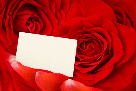 mother'sday: Closeup of gorgeous red roses and petals and an empty card for a loving message