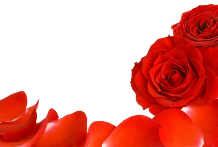 mother'sday: White copyspace with two red roses and petals as a border