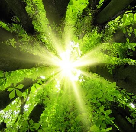 아름답게 우거진 나무에 의해 누 태양 숲에서 눈길을 끄는 캐노피 풍경 스톡 콘텐츠