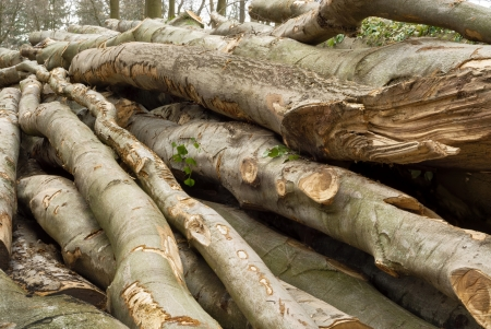 feedstock: Pile of lumber in a forest, shot in soft daylight