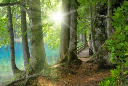 Paisaje con el sol brillando a través del follaje, con un lago turquesa claro detrás de los árboles