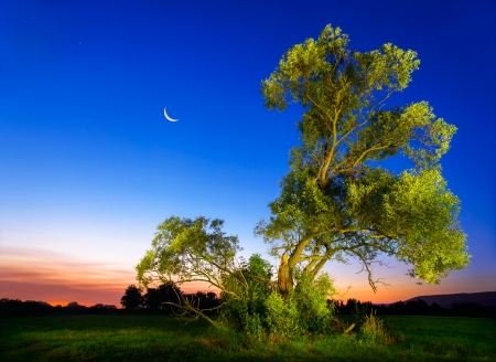Beautifully illuminated old ash tree at nightfall with deep blue sky and moon photo