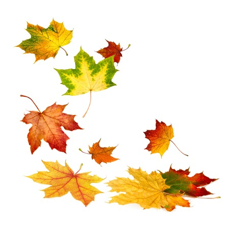 Multi-colored autumn leaves gently falling down, with white copy space photo