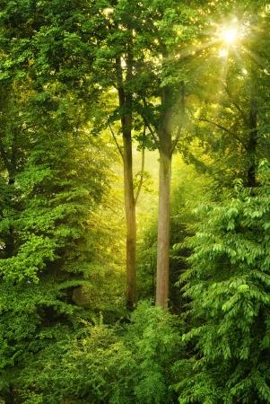 Avond zon schijnt warm door de bomen en het verlichten van het midden van het frame Stockfoto