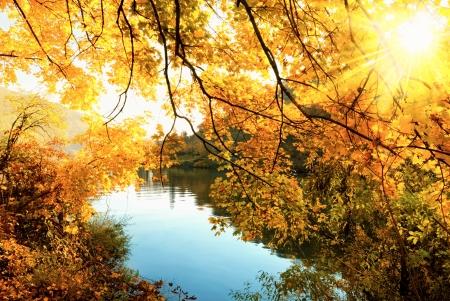 태양은 황금 나뭇잎을 따뜻하게 빛나는 강 경치 골든 가을, 스톡 콘텐츠