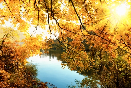 Golden autumn scenic at a river, with the sun shining warmly through the golden leaves Stock Photo