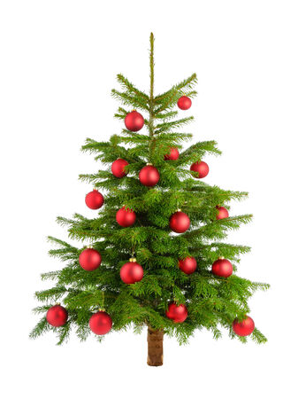 Clean studio shot of a Christmas tree decorated with red baubles, isolated on white photo