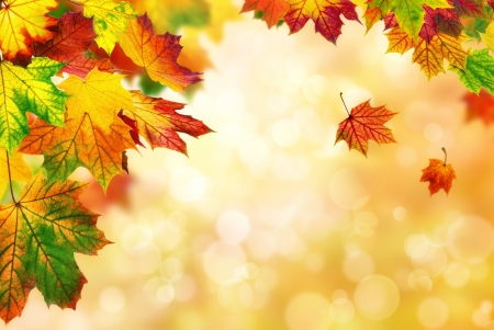 Beautiful autumn bokeh background bordered with colorful maple leaves, shallow focus