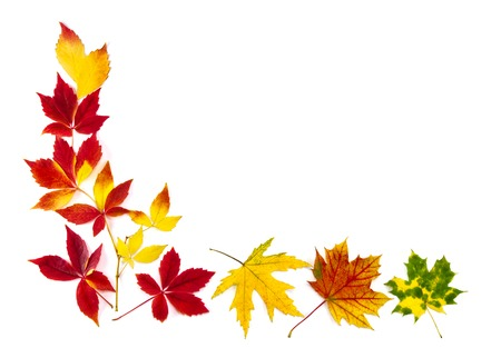 Multi-colored autumn leaves as a frame, with white copy space Stock Photo - 23073175