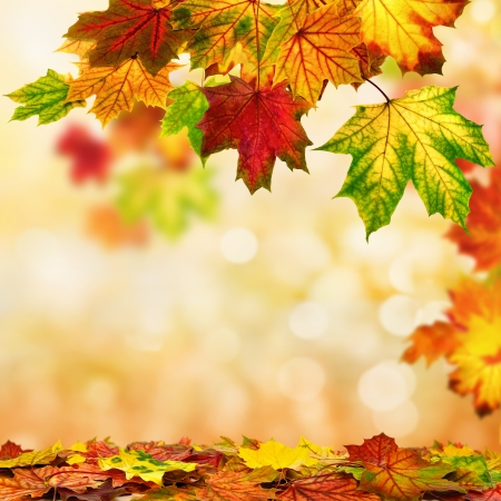 Colorful autumn bokeh background bordered with maple leaves, shallow focus