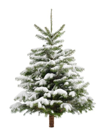 完璧な小さなクリスマス ツリー新鮮な雪の中、純粋な白の背景に分離