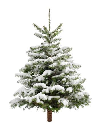 Perfecto pequeño árbol de Navidad en la nieve fresca, aislado en fondo blanco puro