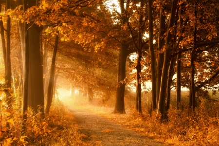 autumn path: Golden sunbeams of autumn on a misty footpath with deciduous trees Stock Photo