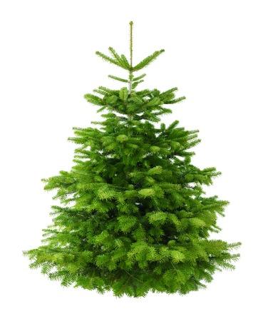 Studio-opname van een verse prachtige kerstboom zonder versieringen, geïsoleerd op wit