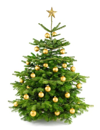 Elegant studio shot of a Christmas tree with gold ornaments, isolated on white Reklamní fotografie