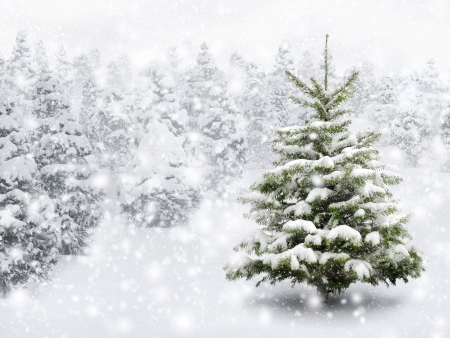 Outdoor shot of a nice little fir tree in thick snow, for the perfect Christmas mood photo