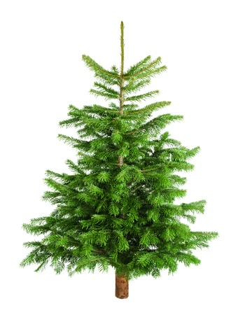 Studio shot of a fresh gorgeous Christmas tree without ornaments, isolated on white photo