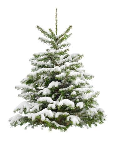 完璧な小さなクリスマス ツリーを新鮮な雪の中で純粋な白い背景で隔離