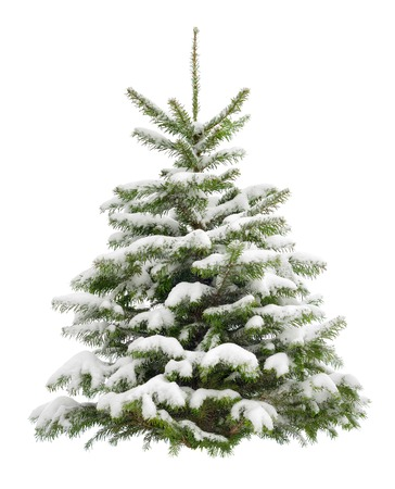 christmas time: Perfect little Christmas tree in fresh snow,  isolated on pure white background Stock Photo