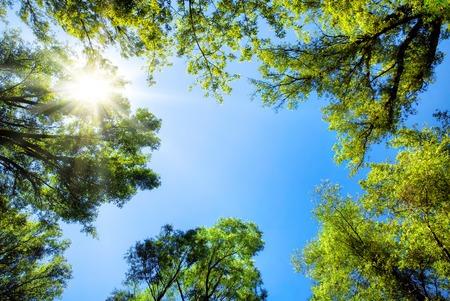 La canopée des grands arbres encadrant un ciel bleu clair, avec le soleil qui brille à travers