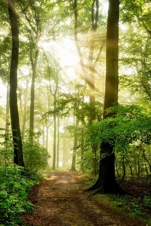 아침 태양이 안개를 통해 빛나는 아름다운 숲으로의 광선을 캐스팅