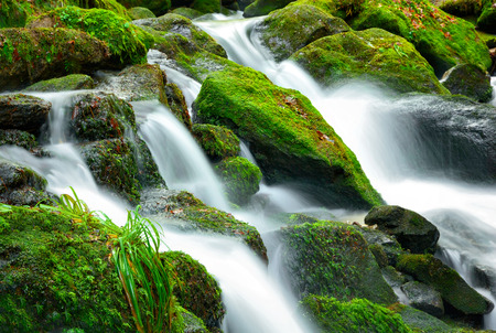 Mountain creek cascade with fresh green moss on the stones, long exposure for soft water look photo