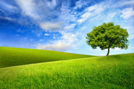 Scenic paradise with a single tree on top of a green hill, blue sky and white clouds and another hilly meadow in the background