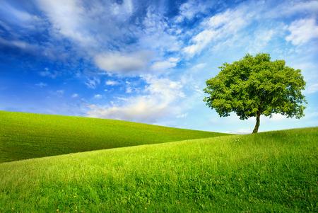 Schilderachtige paradijs met een enkele boom op de top van een groene heuvel, blauwe lucht en witte wolken en andere heuvelachtige weide op de achtergrond