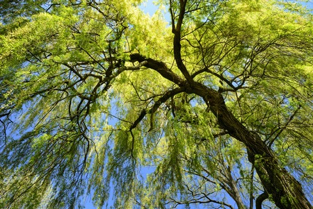 willows: Worm Stock Photo
