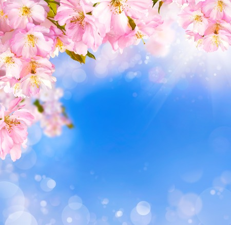 Blue and pink background with cherry blossoms framing the sky and bokeh light effects Reklamní fotografie