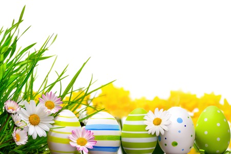 Border arranged with Easter eggs, little spring flowers and grass on white background Stock Photo