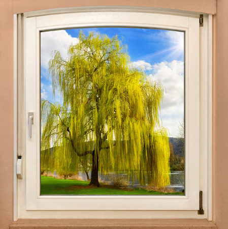 weeping willow: The view through a window revealing a beautiful tree on a glorious sunny spring day