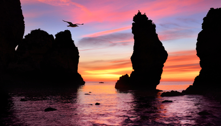 Gorgeous colorful sunrise at the ocean, with silhouettes of tall rocks in the water and a flying seagull photo
