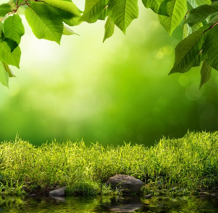 Serene background with grass, leaves, stones and water in the foreground over out of focus trees and sunlight photo