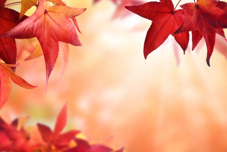 Gentle autumn bokeh background bordered by red maple leaves, with light rays and shallow focus