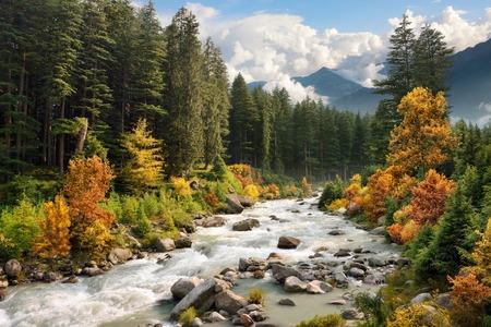ストリームと紅葉の森と美しいカラフルな風景