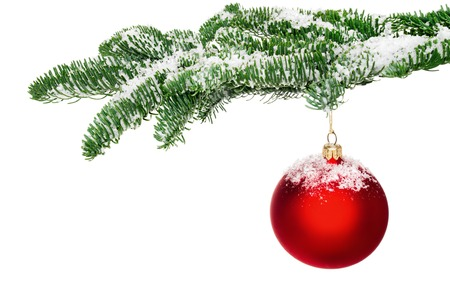 holiday ornament: Bright studio shot of an isolated red Christmas bauble hanging from a fresh green snow-covered fir twig