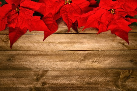 vignetting: Christmas background composed of wood planks and poinsettia, with warm colors and nice vignetting