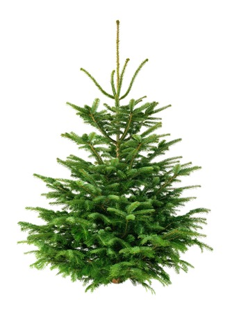 simple: Studio shot of a fresh gorgeous fir tree for Christmas, without ornaments, isolated on pure white Stock Photo