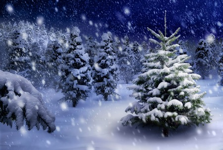 Outdoor nacht opname van een mooie dennenboom in een dikke laag sneeuw, voor de perfecte kerststemming