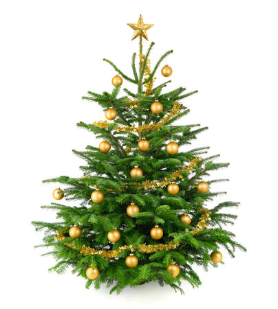 shiny christmas baubles: Clean studio shot of a very nice natural Christmas tree decorated with gold baubles and garland, isolated on white