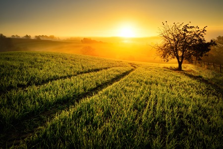 Rural landscape with a hill and a single tree at sunrise with warm light, trails in the meadow leading to the golden sun