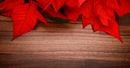 vignetting: Christmas background composed of a wood surface and poinsettia, with pleasant colors and nice vignetting