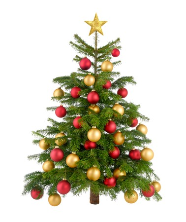 Clean studio shot of a gorgeous natural Christmas tree decorated with red and gold baubles and top star, isolated on white photo